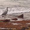 Laguna Beach - 27 Dec 2009
