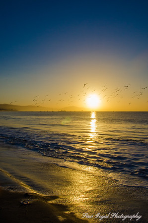 Morning Gold