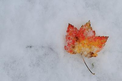 Fall Snowstorm, October 2011
