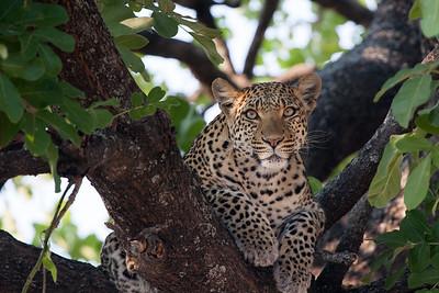 Okavango 09 2008