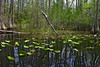 "Okefenokee Swamp, Georgia   - Nature Photographer for Raleigh, Global Village Studio   <a href=""http://globalvillagestudio.com/"">http://globalvillagestudio.com/</a>"