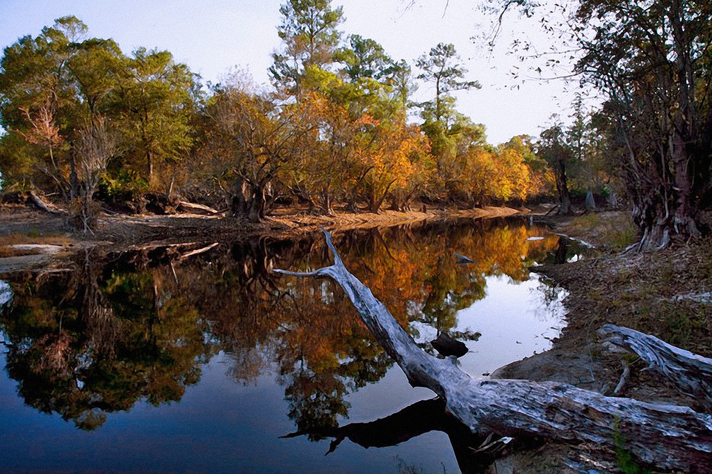 """Okefenokee Swamp, Georgia   - Nature Photographer for Raleigh, Global Village Studio   <a href=""""http://globalvillagestudio.com/"""">http://globalvillagestudio.com/</a>"""