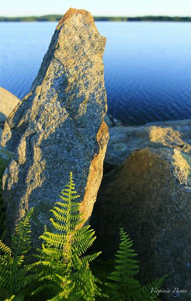 Ferns growing between the rocks...