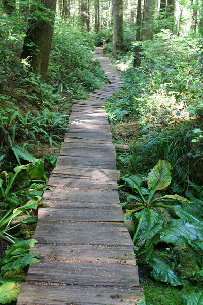 Most of the three mile trail was boardwalk--nice for when it's wet and rainy and muddy