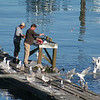 Happy fishermen make for happy gulls!
