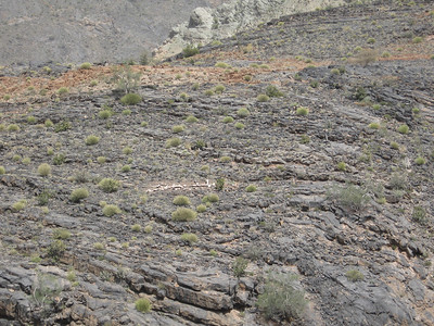 Oman: Small plants growing out of every possible place in the rock.