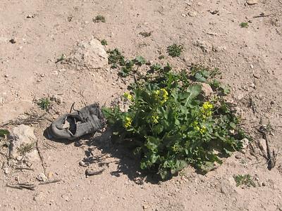 Wadi Rum, Jordan: Nature triumphs