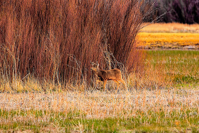 Bosque de Apache National Wildlife Refuge, NM