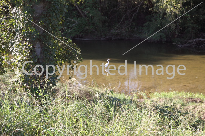 Onion Creek 049