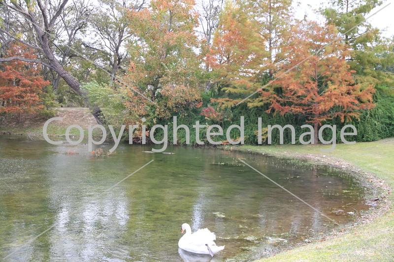Onion Creek 117