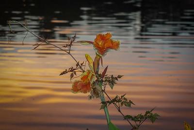 Orange Lake, Cotee River Walk, Downtown New Port Richey, Cars, 52015