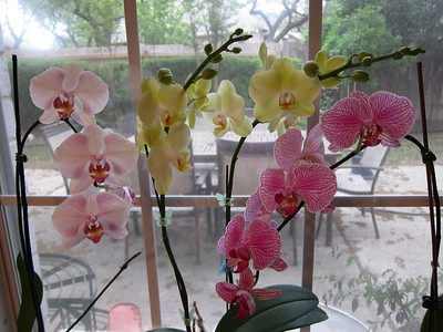Orchids, Spring 2011