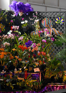 © Joseph Dougherty. All rights reserved.   Pacific Orchid Exposition 2010.  Theme: Carnival.