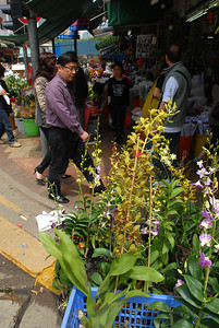 © Joseph Dougherty. All rights reserved.   Blooming orchids for sale at the Hong Kong flower market.