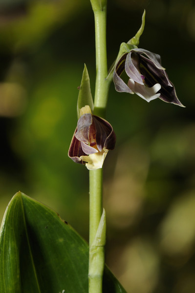 Orchid (4