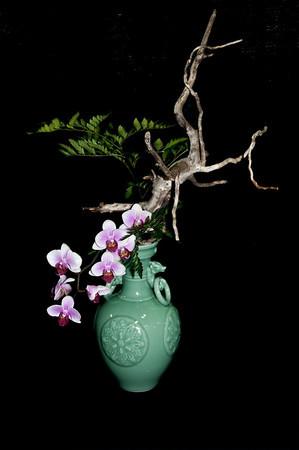 2010 Ottawa Orchid Show
