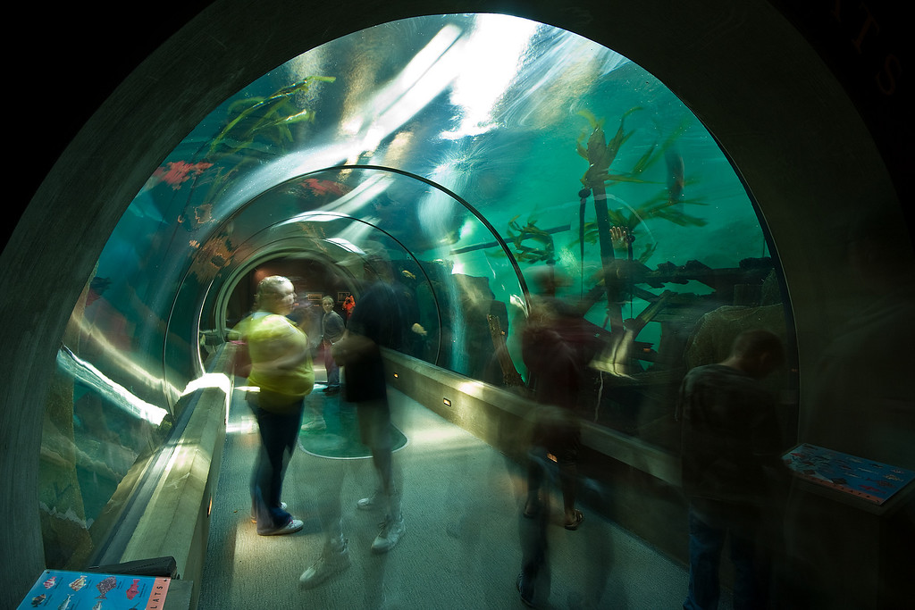 People in Motion, Oregon Coast Aquarium in Newport