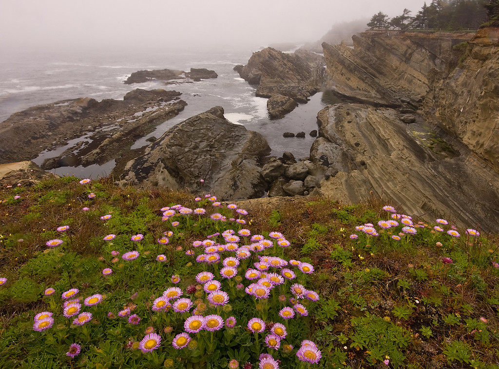 Wildflowers on a Foggy Morning at Shore Acres