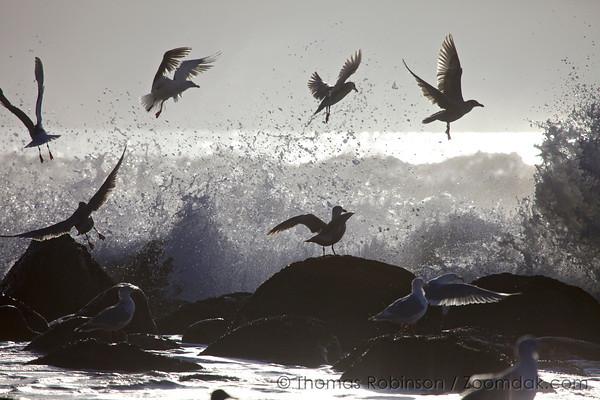 The Escape - Oregon Coast Photos