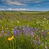 Zumwalt Prairie spring 1