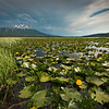 Sparks Lake Marsh and Bachelor