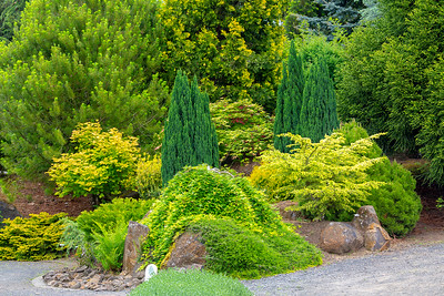 Various green shrubs