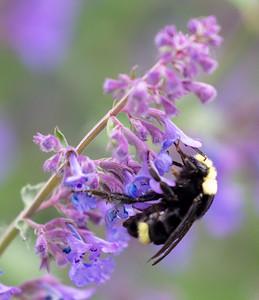 Bee in unidentified flower