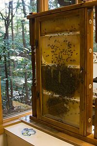 Oregon Ridge Honey Bees