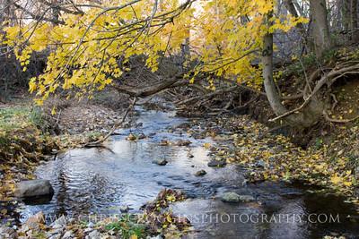 Oregon Branch Stream 2
