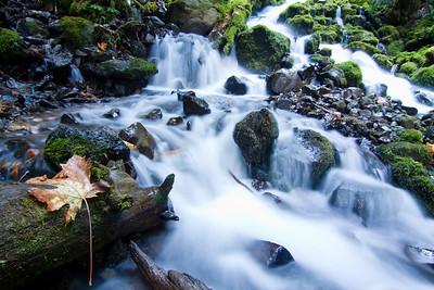 Just below Fairy Falls on the Wahkeena/Multnomah loop trail in the Columbia River Gorge  Print size 5 x 7 $14.00 USD 8 x 10 $20.00 USD 8 x 12 $20.00 USD 11 x 14 $28.00 USD 12 x 18 $35.00 USD 16 x 20 $50.00 USD
