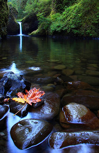 Fall is coming... a sign of fall in September. Punch Bowl Falls, Columbia River Gorge, OR  Print size 5 x 7 $14.00 USD 8 x 10 $20.00 USD 8 x 12 $20.00 USD 11 x 14 $28.00 USD 12 x 18 $35.00 USD 16 x 20 $50.00 USD