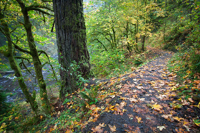 A fall trail in the Columbia River Gorge