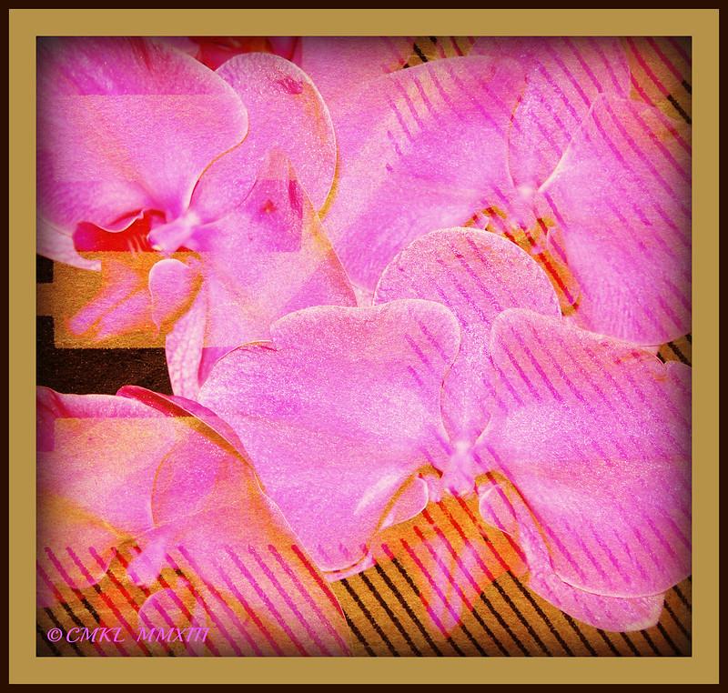 Orquídeas Rosas