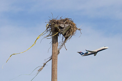 Nest is just east of the main runway.  Wonder where they got the crime scene tape that's dangling from the nest, lol