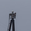 Osprey nest, Port of Richmond Channel