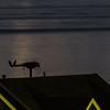 RYC Osprey @night 004