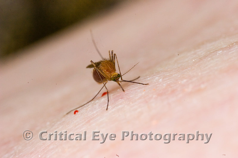 A mosquito bites the photographer.