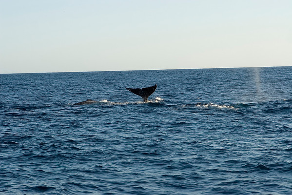 Another shot of a whale