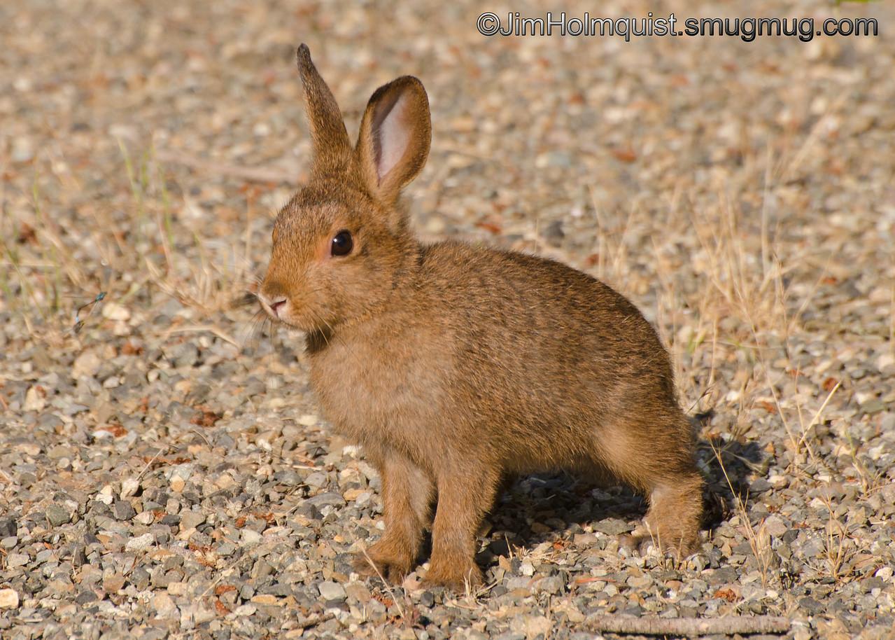 Bunny - suddenly realized he wasn't alone. Taken in 2012 near Olympia, Wa.