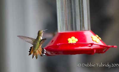 Hummingbird Multnomah Falls Oregon © 2013