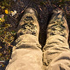 Pollen-covered hiking boots in a wildflower field, southern Joshua Tree National Park.