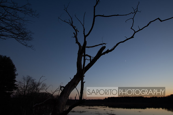 Tree at Dusk - Ipswich River