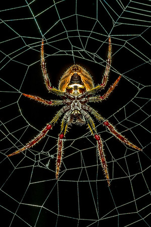 Spider Outside our House