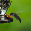 Hummingbird at feeder at River Ridge through Screen and Window