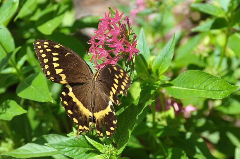 Butterfly in Brunswick, Georgia