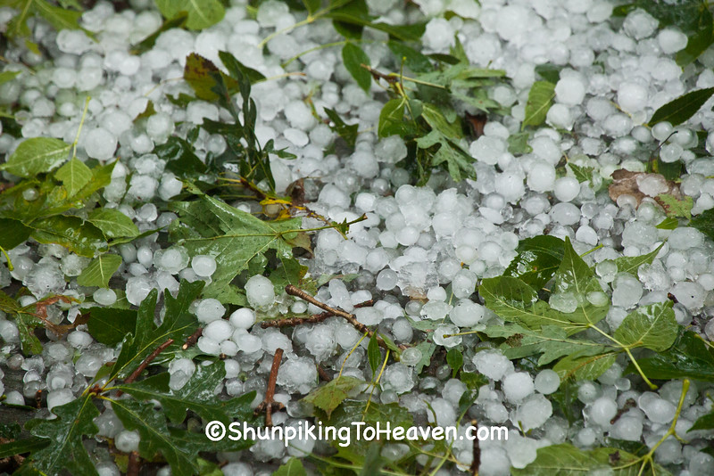 Hail and Stripped Leaves, Dane County, Wisconsin