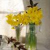 daffodils 037