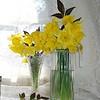 daffodils 062