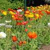 Biltmore House Gardens Spring 08