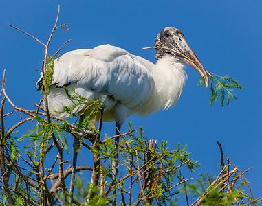 Nest Tending
